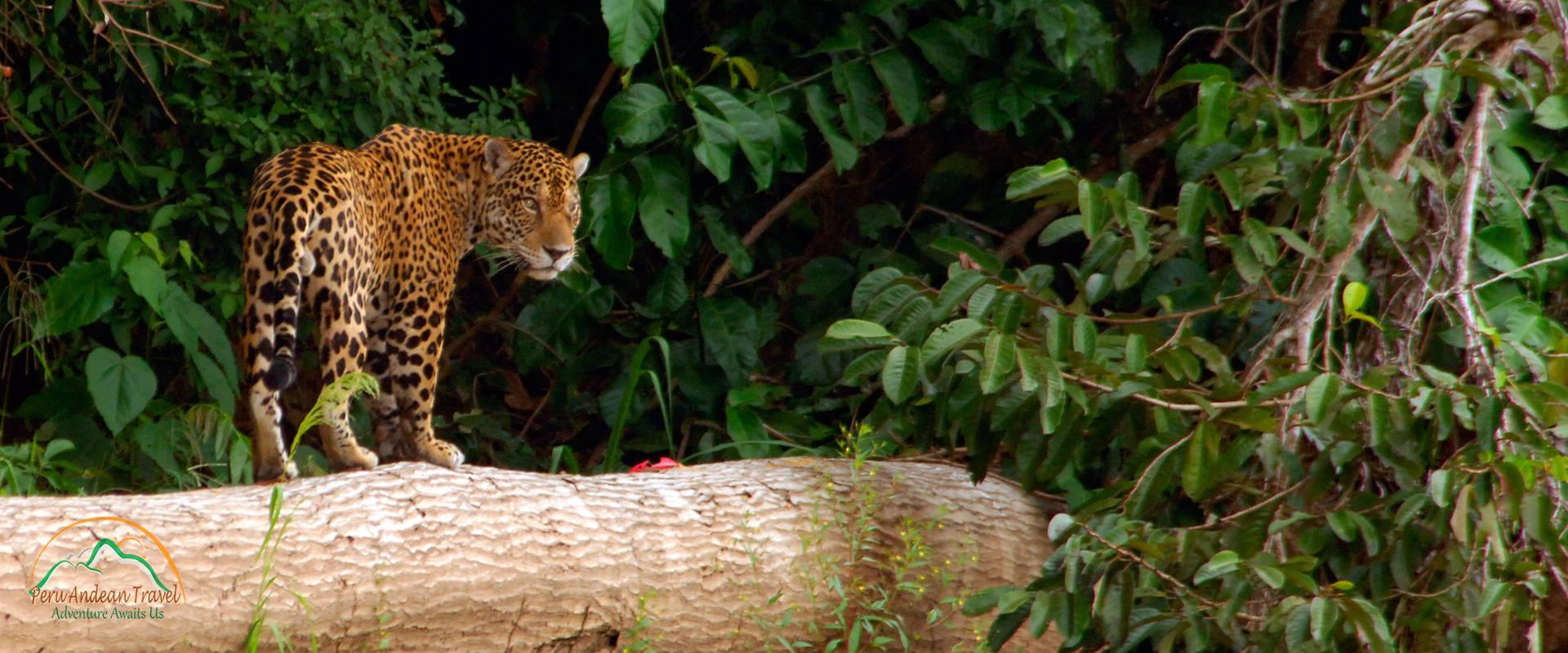 Manu Jungle Expeditions